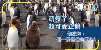 萌爆了!超可愛企鵝!