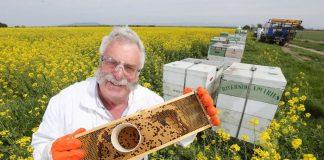 塔斯馬尼亞蜂蜜是世界上最好的蜂蜜之一 (Photo from the Mercury)