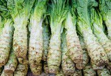 celtuce 萵筍並不是筍類,而是萵苣屬的一種
