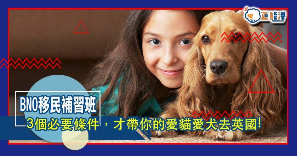 原來有這3個必要條件,才帶你的愛貓愛犬去英國!