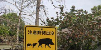 《偶遇》  中午出門陪老伴吃飯,飯後她上班,我自個兒往山上走,經「八爪魚公園」,向香港仔水塘方向進發。走了大約三分一的下山路,看見集水道的山坡對面一家四口在